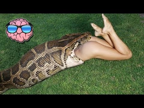 Top 10 Pet Animals That ATE Their Owners