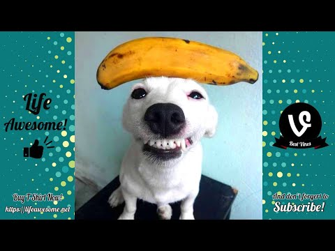 TRY NOT TO LAUGH - Funny Animals Compilation 2019 😂 Funniest Animals Ever 🤣