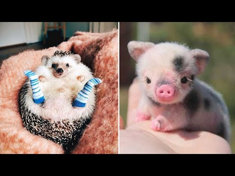 Cutest Animals! Cute baby animals Videos Compilation cute moment of the animals #10