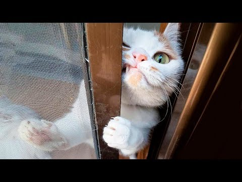 😂  Funniest 😻 Cats and 🐶 Dogs - Awesome Funny Pet Animals' Life Videos 😇