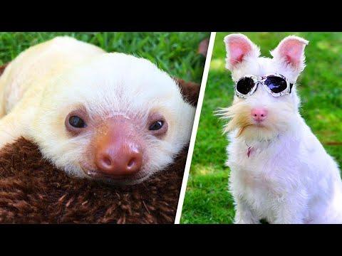 Extraordinary Albino Animals Are Defying the Odds