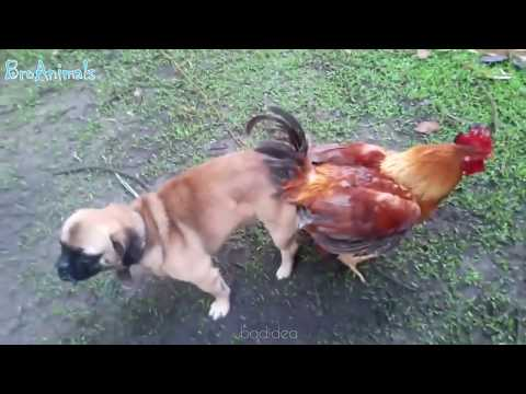 Try Not To Laugh Compilation #7 - Best Funny dogs videos - FUNNIEST ANIMAL VIDEOS 2018 🐶🐶🐶🐶