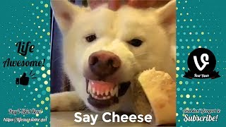 TRY NOT TO LAUGH - Funny Animals Video 2019 - Say CHEESE