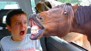 Funniest Animals Scaring People Reactions of 2019 Weekly Compilation #2 🐪🦗🐠  Funny Pet Videos