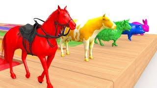 Chanson Animals Color Pool  | Comptines Et Chansons | À Bébé Chanson