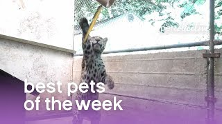 Best Pets of the Week - DANCING BEARS | The Pet Collective