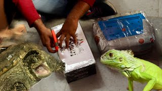 Special Exotic pets unboxing! | Wildly Indian