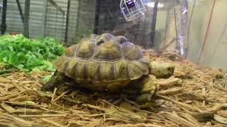 Land and Sea Exotic Pets Tour