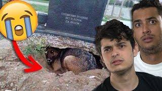 8 Cachorros que NÃO ABANDONARAM seus donos mesmo DEPOIS DA MORTE !!