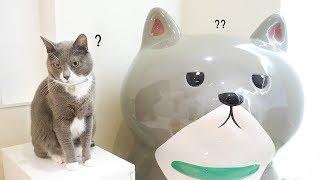 초대형 자기 동상을 실제로 본 고양이