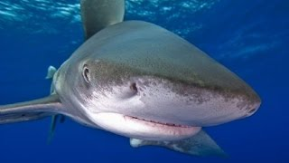 Top 10 Most Dangerous Animals in The Sea