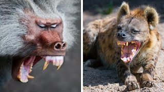 Most DANGEROUS Animals In Africa!
