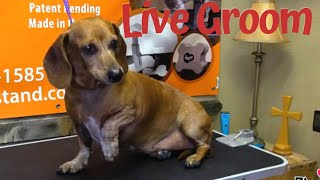 Live Pet Grooming in Texas