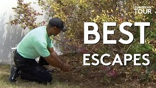 Greatest Escapes of the Year | Best of 2019