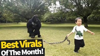 Top 60 Viral Videos Of The Month - October 2019