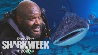 Shaq Swims With a Whale Shark! | Shark Week