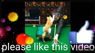 DJ REMIX MUSIC FUNNY VIDEO 🤩🤩🤩🤩😂😂😄😄😜😛🤣🤣💯💯💯💯💯💯💯💯💯💯💯💯😸😸😸😺😾😺😸😾😺😾😾😾👆👆👆👆👆👆👆👆👆👆👆👆 September 23, 2020......