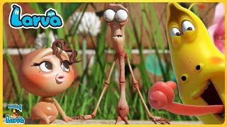 Larva Pitapat ( Season 3) Larva Cartoons - Comics - Official🥟 Cartoon Comedy 2020🍨Comics Compilation