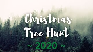 Christmas Tree Hunt 2020
