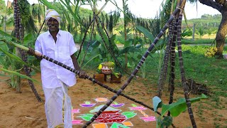 Village Pongal Celebration | KGF Cooking Channel Celebrate our Traditional Festival |