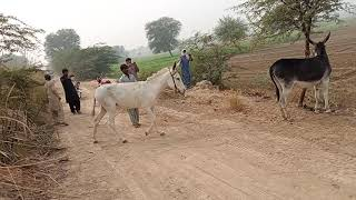 my village animals very funny March 21, 2021