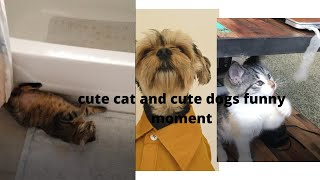 baby cats   cute and funny baby cat videos compilation . sopnil tech .😂😂 . #1